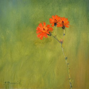 "Orange Hawkweed, 6"" x 6"" Oil on gesso board"